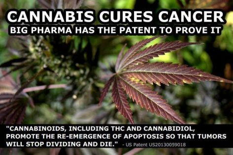 CANNABIS CURES CANCER and Big Pharma Has the Patent to Prove it!