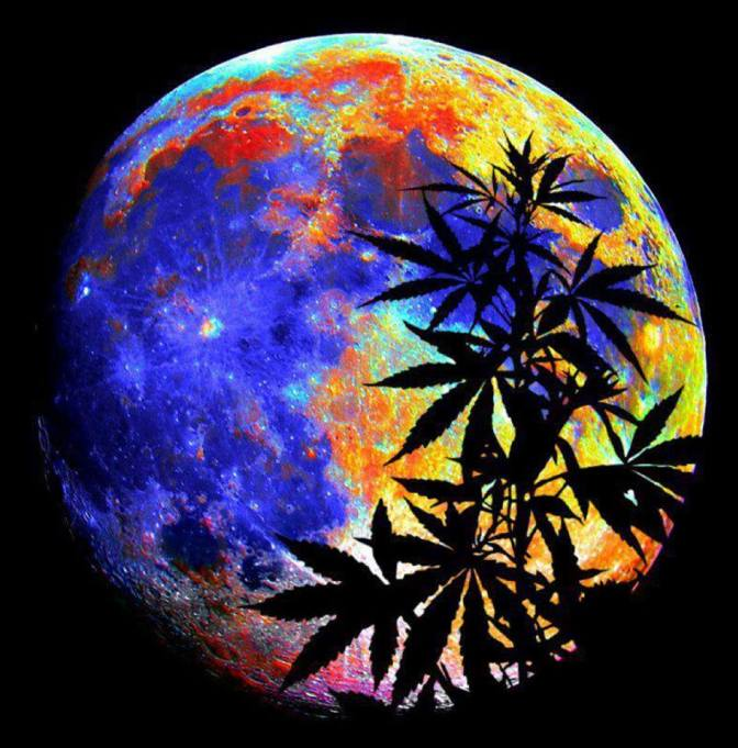 Cannabis Flowers at Night