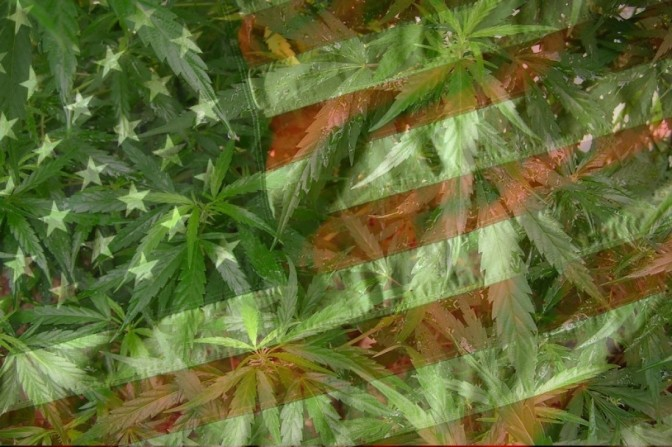 cropped-american-flag-and-weed.jpg