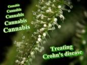 Cannabis Treating Crohn's Disease