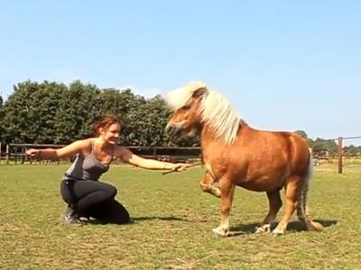 Flip the Pony!