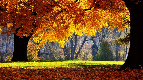 Beautiful explosion...of Autumn! Enjoy and relax while you look at this scene most of us wish we were at right now on this cold, snowy day!