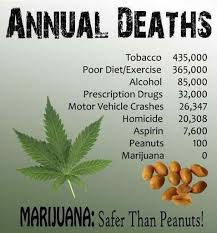 Marijuana death facts