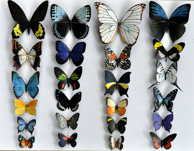 Rainforest Butterflies image courtesy of google images