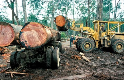 The Rainforests of the world really are on borrowed time. The rate of destruction is almost exponential.