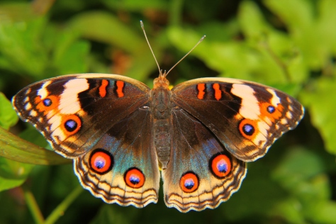 The Rainforest Butterfly by Photographer Rusyadi Aulianur image courtesy google images
